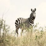 Ultimate Safari in Tanzania