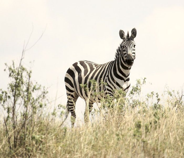 Ultimate Safari in Tanzania