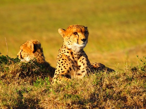 Kenya Tour Package